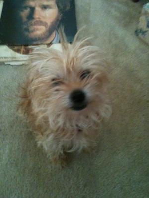 my dog chauncey Linda Vernon Humor