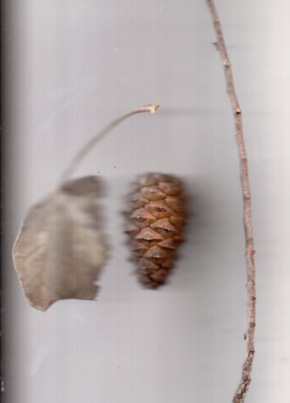 A leaf, a pine cone and a stick